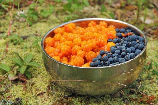 собираем ягодки для компота